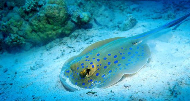 观赏世界上最大的两栖动物中国娃娃鱼